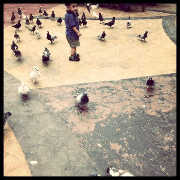 Noah and the Pigeons
